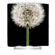 Dandelion Gone To Seed Shower Curtain