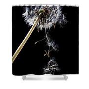 Dandelion Loosing Seeds Shower Curtain