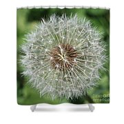 Dandelion Macro Shower Curtain
