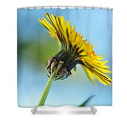 Dandelion Reaching High Shower Curtain