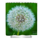 Dandelion Seed Head Expressionist Effect Shower Curtain