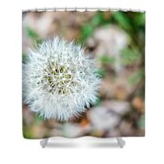 Dandelion Seed Head Shower Curtain