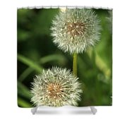 Dandelion Seed Heads Shower Curtain