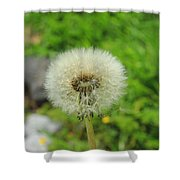 Dandelion Seed Shower Curtain