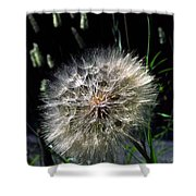 Dandelion Seedball Shower Curtain