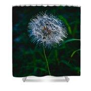 Dandelion Seeds 2 Shower Curtain