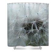 Dandelion Seeds Close-up Shower Curtain