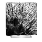 Dandelion Seeds I Shower Curtain