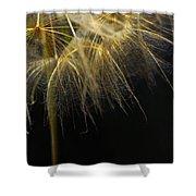 Dandelion Seventy Four Shower Curtain