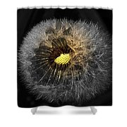 Dandelion Spotlight Shower Curtain