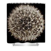 Dandelion Sun Shower Curtain
