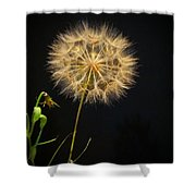 Dandelion Thirty Nine Shower Curtain