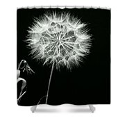 Dandelion Thirty Six Shower Curtain