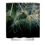 Dandelion Thirty Two Shower Curtain