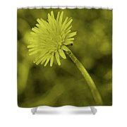 Dandelion Tint Shower Curtain
