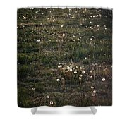 Dandelions From Foot To Far Shower Curtain