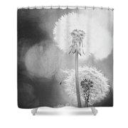 Dandelions In Sunlight Shower Curtain