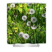Dandelions On The Maryland Appalachian Trail Shower Curtain
