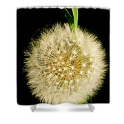 Dandelion's Seed Head. Shower Curtain