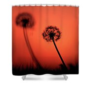Dandelions Silhouettes At Sunset Shower Curtain