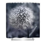 Dandilion Shower Curtain