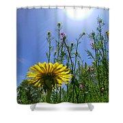 Dandilion Skyline Shower Curtain