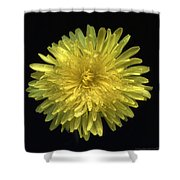 Dandy Dandelion Shower Curtain