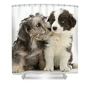 Dandy Dinmont Terrier And Border Collie Shower Curtain