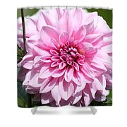 Danielle's Dahlia Shower Curtain