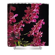 Danrobium Orchids Used To Make Lais Shower Curtain