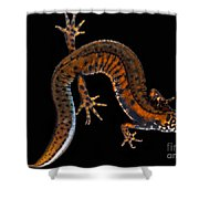 Danube Crested Newt Shower Curtain