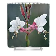 Danza De Angeles Shower Curtain