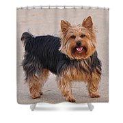 Dapper Dog Shower Curtain