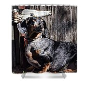 Dapple Dachshund Shower Curtain