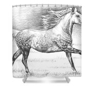 Dapple Grey Horse Shower Curtain