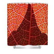 Dark And Bright Shower Curtain