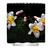 Dark Day Bright Lilies Shower Curtain