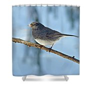 Dark-eyed Junco Or Snowbird - Junco Hyemalis Shower Curtain