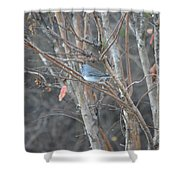 Dark Eyed Junco Perched On Tree Limb Shower Curtain