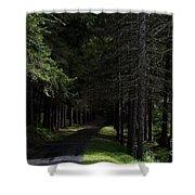 Dark Forest Road Shower Curtain
