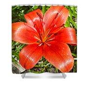 Dark Orange Red Lily II Shower Curtain