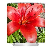 Dark Orange Red Lily Shower Curtain