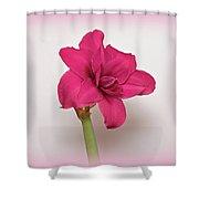 Dark Pink Amaryllis Shower Curtain