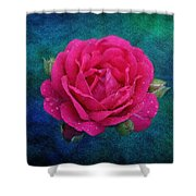 Dark Pink Rose Shower Curtain