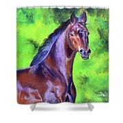 Dark Red Bay Horse Shower Curtain