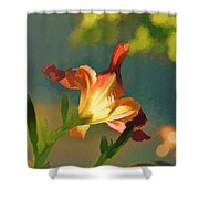 Dark Red Day Lily With Sun Shining Through I Abstract I Shower Curtain