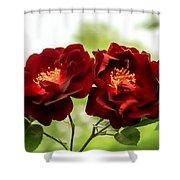 Dark Red Roses Shower Curtain
