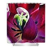 Dark Tulip Macro Square Format Shower Curtain