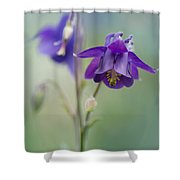 Dark Violet Columbine Flowers Shower Curtain