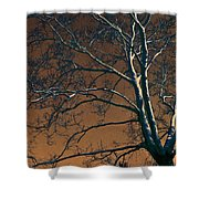 Dark Woods II Shower Curtain
